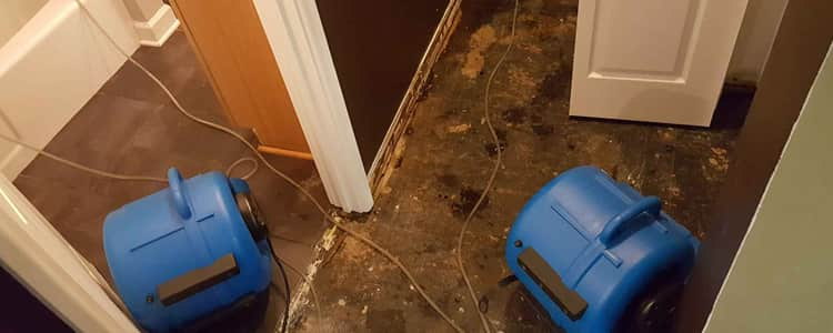 Best Flood Damage Restoration Cannington
